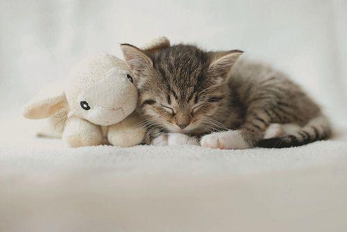 Oui, une image de chaton sur mon blog. Je sais. Je. Ok, je suis perdue.