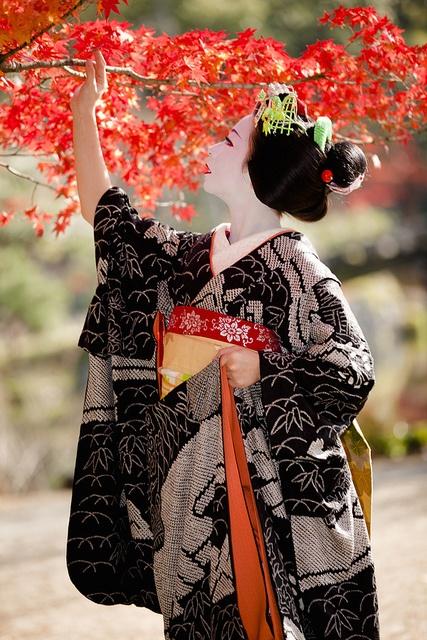 Une splendide maiko sous les momiji.