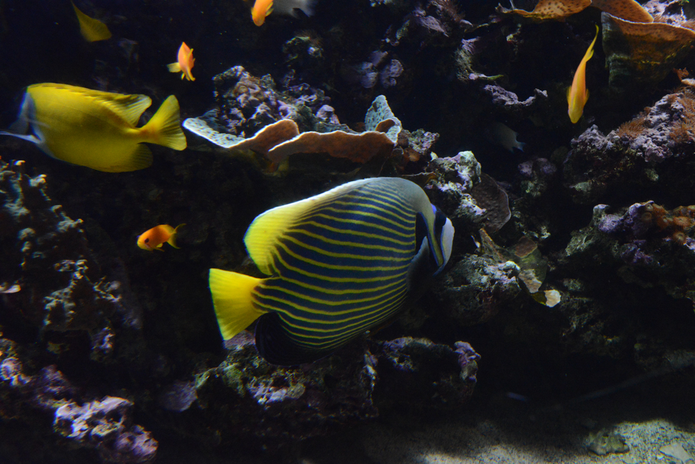 poisson-couleurs