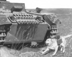 chiens mines URSS-01d